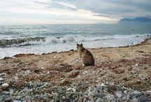 Show me the sea (Покажи мне море) / О море, морских впечатлениях, ароматах, соленых брызгах, вкуса соли на губах и южных цветах
