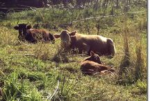 Livestock Systems