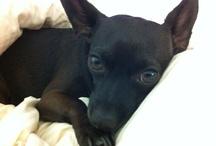 I love Coco+Jett (& all animals). / by Laura McQueen Thomason