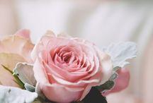 kwiaty piekne