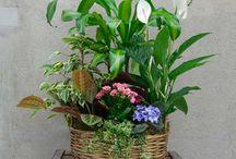 Plantas | Bourguignon Floristas