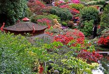 Dorset Gardens / Gardens & outdoor spaces in Dorset