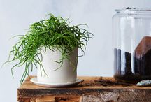 Houseplants / Houseplant care