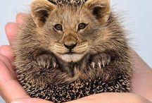 Фотошоп животные