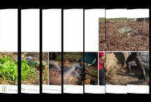 Vidéos de permaculture / Ici toutes les vidéos créées par PermacultureDesign. Retrouvez les articles complets sur : http://www.permaculturedesign.fr