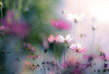 finețea florilor