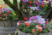Landscaping/Gardening/Plants/Flowers / by Debi Vitale