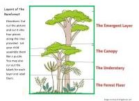 School Theme - Rainforest Themes