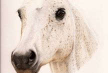 Opere cavalli