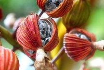 Nature | Seeds - Wood - Stone