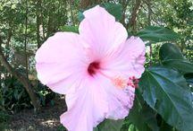 Botanical Gardens / Botanical Gardens at Dade City's Wild Things ZOO