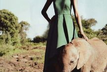 If I could have a pet elephant, I would