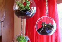 Terrariums and airplants / by Susanna Eslin