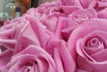 цветы / настроение
