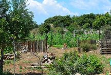 Permaculture @ The Olive Farm / Organic Farming, Sustainable living, Crete, Greece