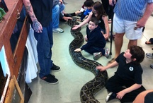 Events / Hire The Serpentarium - A Living Reptile Museum for your next event!