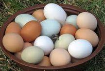 Egg eggeglass og egeevarmerere