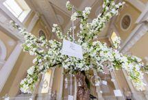 Enchanted Wishing Tree Proposal at Syon House