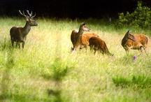 GREAT HUNTING / Magazínové stránky o myslivosti přírodě zvěři lovecké stezky příběhy úlovky fotografie videa lovecké zbraně optika příslušenství způsoby lovu
