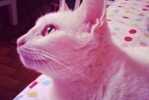Gatas amadas / Cinco anjinhos felinos
