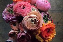 Kert es virágok