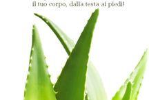 Immagini Aloe / Foto, immagini e bandiere sociali relative all'Aloe Vera!