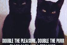 kittie love