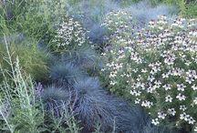 Meadow Garden / A modern garden style