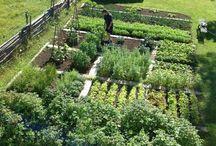 Grădini de legume