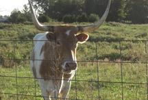 We LOVE Animals / Livestock, pets .... ANIMALS