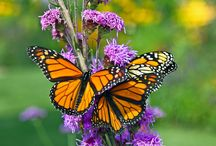 Butterflies and Moths / butterflies and moths