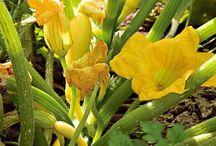 Jardin de fleurs et de legumes / .. / by Carol-lynne Olsen