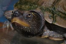 teknőseim