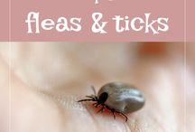 Lyme Disease / All things Lyme Disease