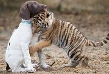 animals ...