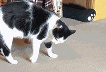 gatto che fa la capriola