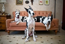 Dogs I want! / by Heather Carboneau