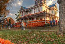 Pumpkins, pumpkins, pumpkins! / by Cindy Withers
