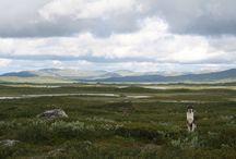 På lediga stunder / Fiske och vandring i Sorsele, Västerbotten Lappland. Vi bor så fantastiskt centralt! Får vi chansen till ledighet kan vi gå i vilken riktning som helst och möta naturens skönhet!