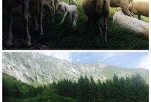 •ANIMALS•