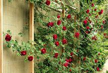 Jardins, plantes