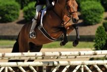 Horsey Love / by Darlene Cloutier