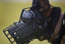 Chien - Dog - собака