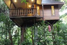 Love Of Tree Houses / by Myst Designs