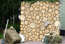 спил дерева
