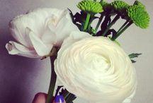 flower / white flowers  Ranunculus  라넌큘러스 꽃말 (매력, 매혹, 비난하다.)  우리 집에도 봄이 왔다.