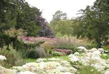 Tuin | Inspiratie beplanting / Weelderig in combinatie met strakke vormen maken een tuin een beleving op zich.