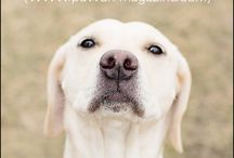 Dog quotes / Love  / by Cookie Hunt Rice