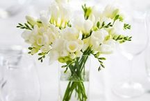 freesias..my fav..and beautiful flowers. / beauty in the garden..