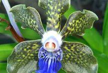 Orkideer
